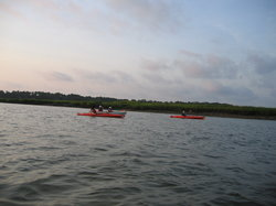 Dolphin fin between kayaks