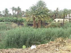 Banana Island (Gezira el-Mozh)