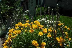 A few of Jan's beautiful flowers everywhere