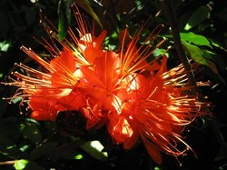 Centenary Lakes - Cairns Botanic Gardens