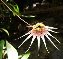 Orchid De Villa