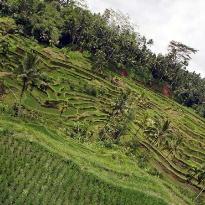 Rice terraces Tegallalang, Bali (20836094)