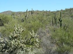 Arizona Territorial Adventures