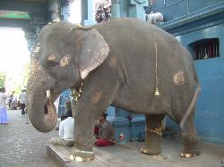 Pondicherry, Tamil Nadu (21021391)