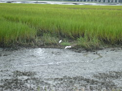 Pinckney Island National Wildlife Refuge