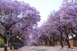 Pretoria. (21112563)