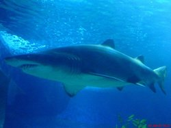 Aquarium of Western Australia - AQWA