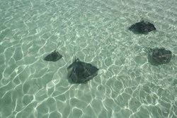 Stingray Adventure