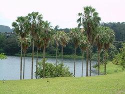 Hoomaluhia Botanical Gardens