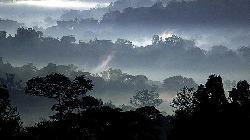 Kibale Forest viewed from garden