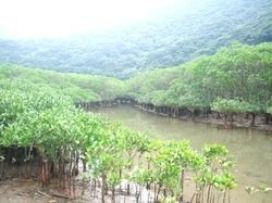 Mangrove Forested Area