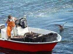 Chatham Fish Dock