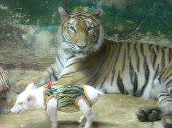 シーラチャー タイガー動物園