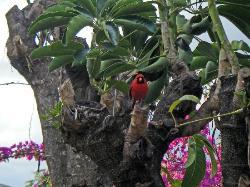 birds at our lanai