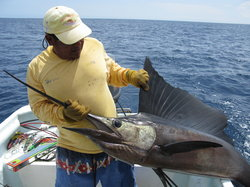 White Shark Sport Fishing & Tours