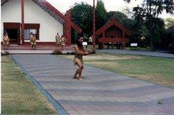 Matariki Hangi & Maori Cultural Performance