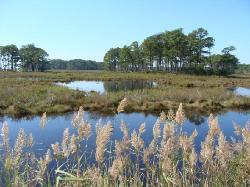 Chincoteague wildlife preserve