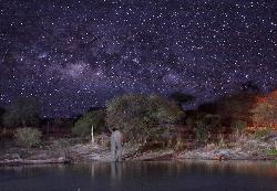 Ellie Sands water hole at night w/elephant.