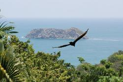 Manuel Antonio - View from our deck
