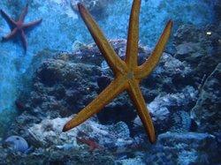 Dubrovnik Sea Aquarium