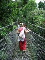Puentes colgantes por las copas de los árboles. (22586094)