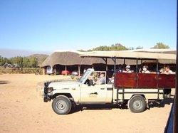 Meerkat Safaris