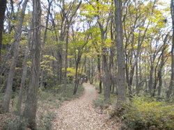 Oyamadairi Park