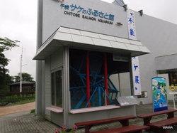 千岁鲑鱼水族馆