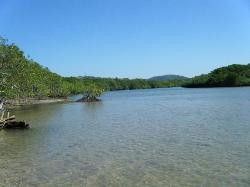 mangroves and estuary to the left