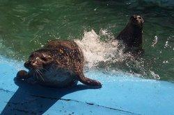 Huntsman Fundy Discovery Aquarium