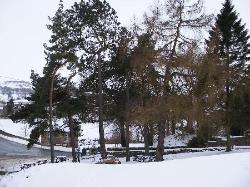 View of the Beer Garden from our 'sledging hill!'