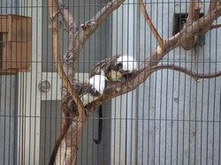 Hamamatsu City Zoo