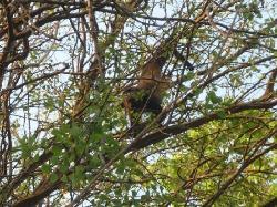 Resort Monkeys