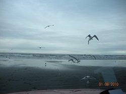 Coastal Serenity