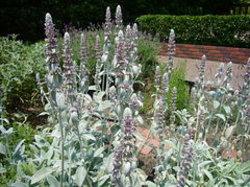 Kobe Nunobiki Herb Garden & Ropeway
