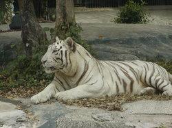 Dai Nam Zoo
