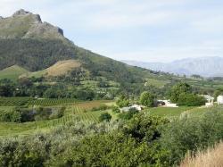 Stellenbosch (24290659)