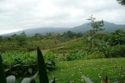 A view of the rainforest.