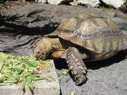 turtle having a snack