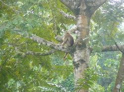 タビン野生生物保護区