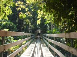 Bobsledding through the jungle in Ochos Rios..that was fun! on Mystic Mountain (24704511)