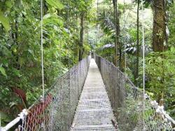 ‪Arenal Hanging Bridges‬