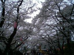 Komiya Park