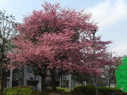 Nishikamata Park