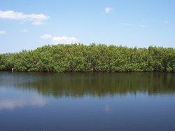 Weedon Island Preserve