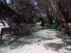 Wanggoolba Creek