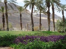 Israel Oasis de Ein Gedi (25254639)