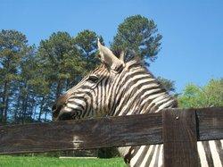 Chestatee Wildlife Preserve & Zoo