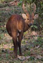 photo was taken at Kaziranga National Park during the Great Himalyan Drive by me.
