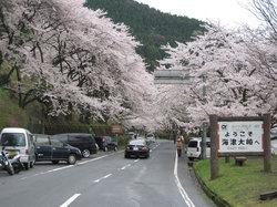 Kaizu Osaki